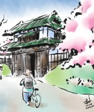 Hirosaki Castle Sakura
